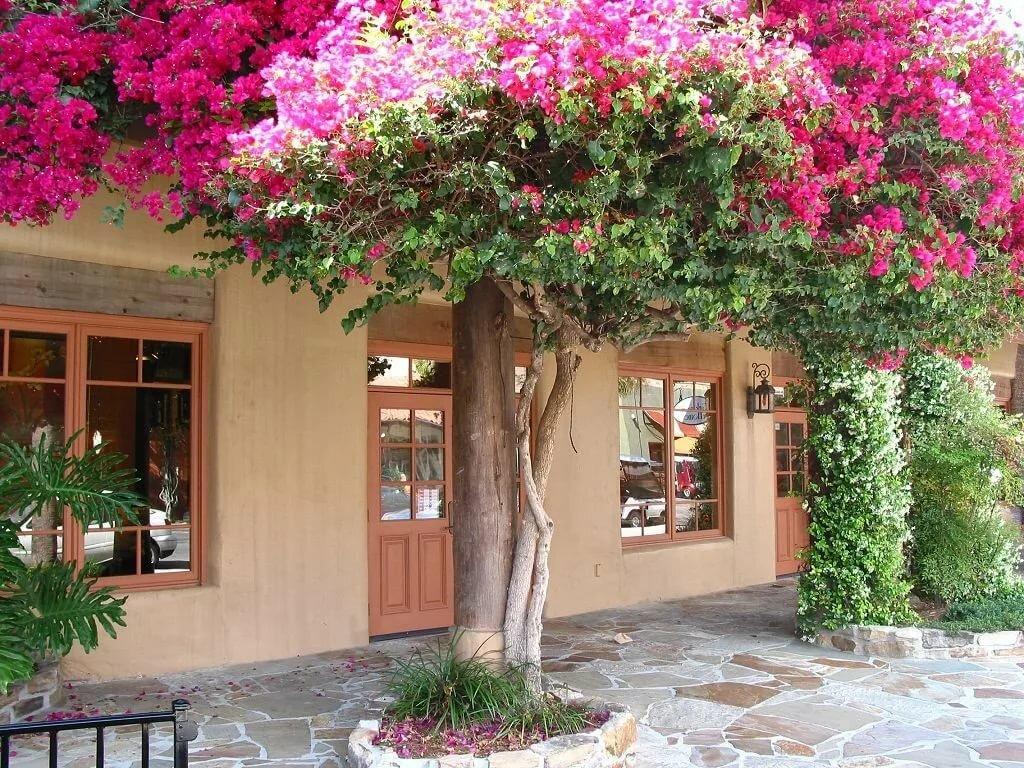 Цветы купить в крыму домик, роз