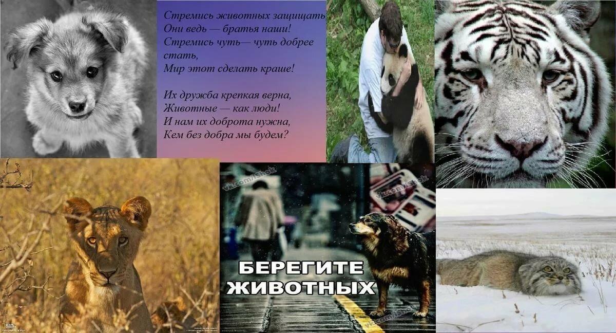 картинки берегите зверей