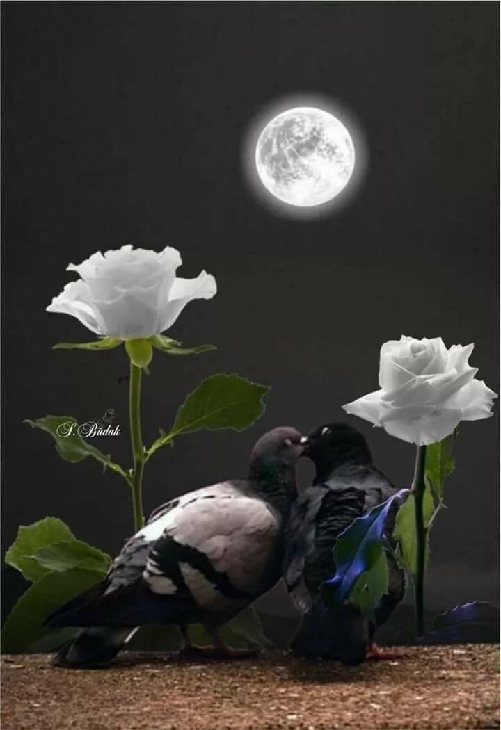 Спокойной ночи красивые открытки птицами и природой, паровозов открытки
