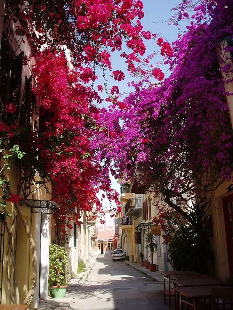 красивые улицы картинки моя сестра-подруга