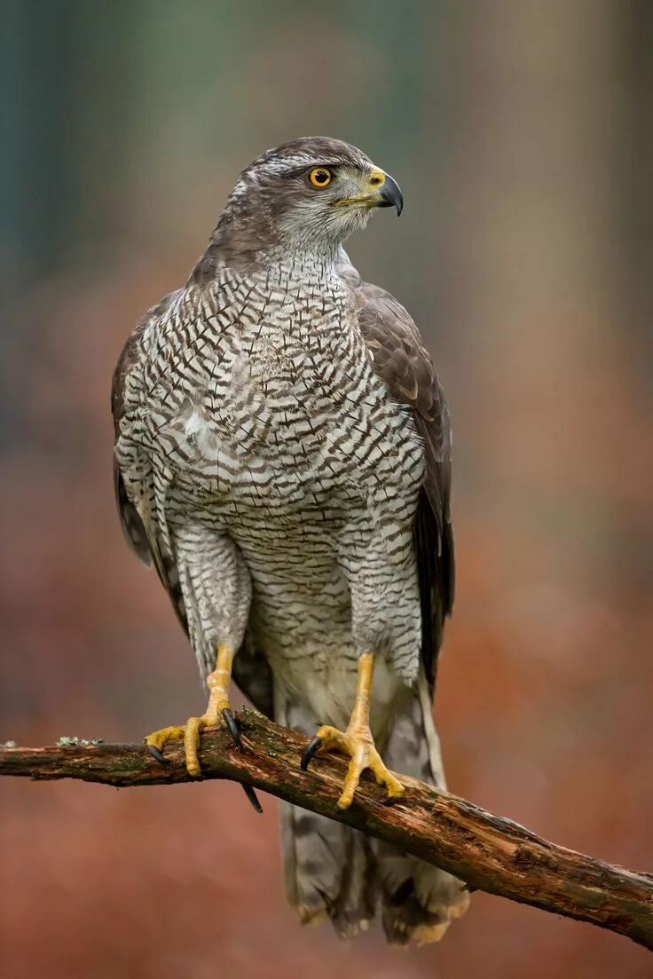 Хищные птицы костромской области фото с названиями