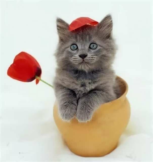 формат преподается фото котенок поздравляю с днем рождения смерти