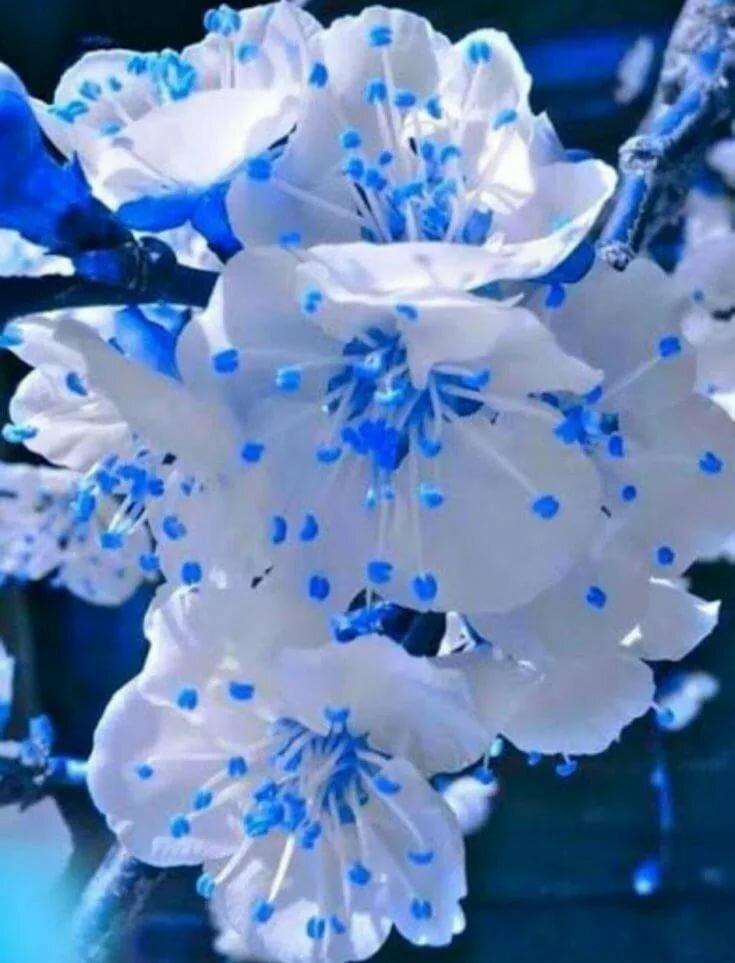 Картинки синее с белым