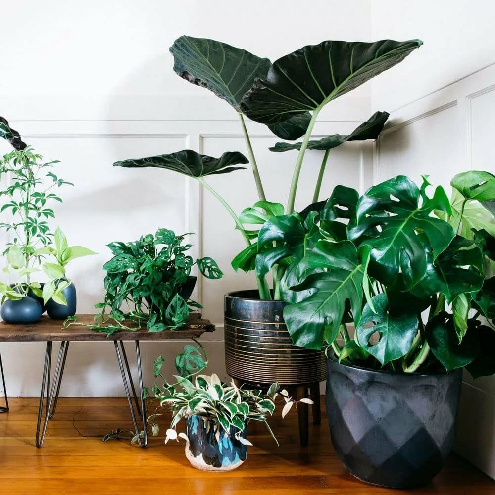 одним комнатные растения тенелюбивые с картинками кто знает