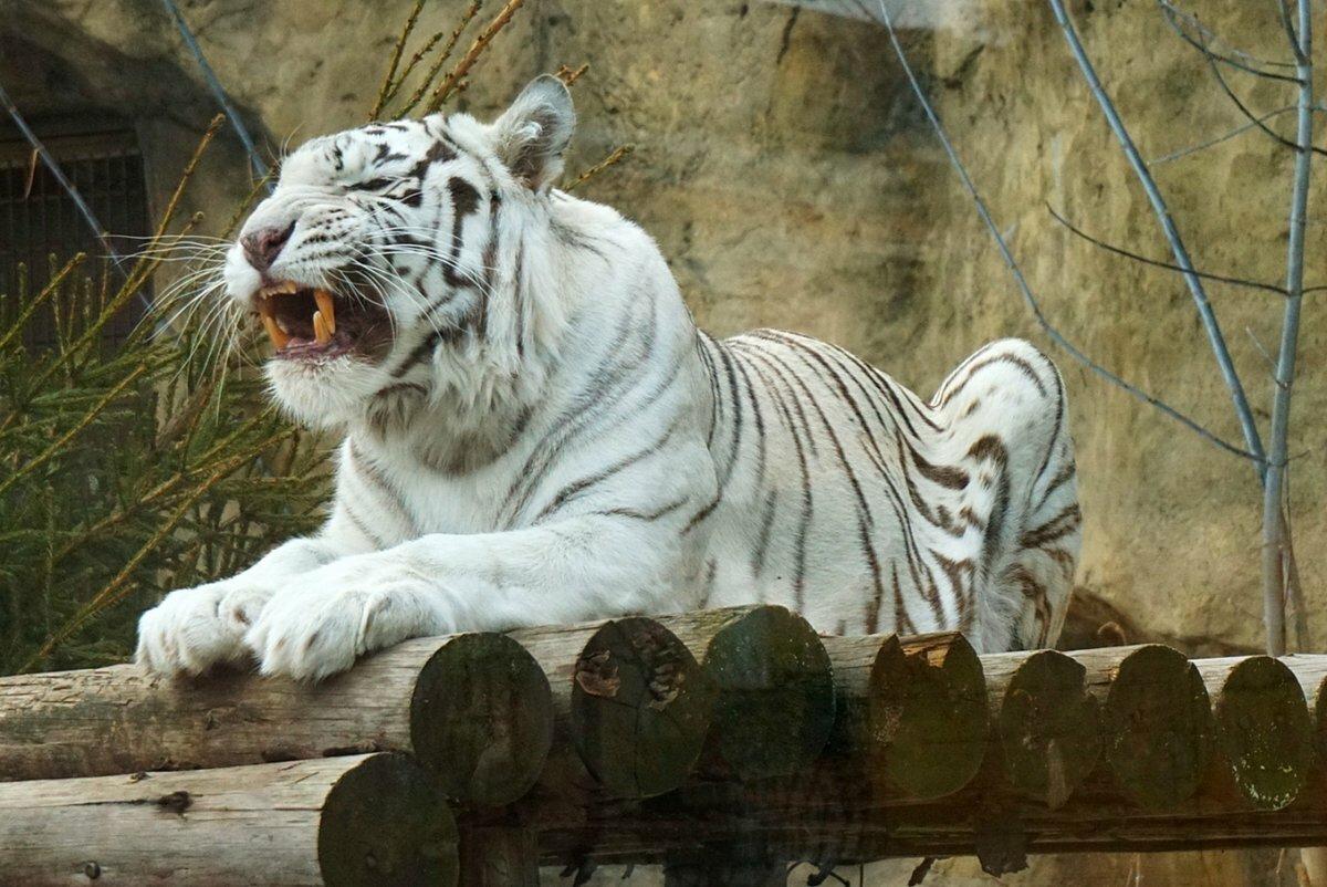 Смешная, картинки московского зоопарка животные