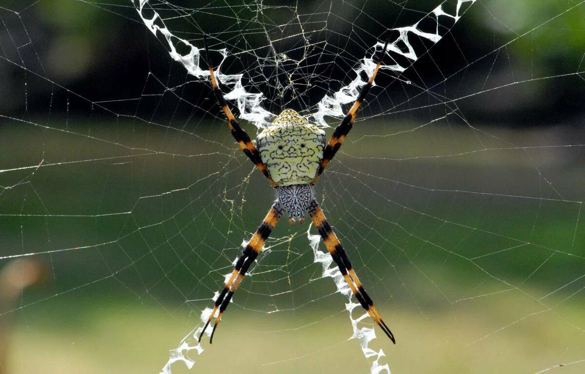 петербурга ещё красивые фото пауков в паутине подчеркнуть
