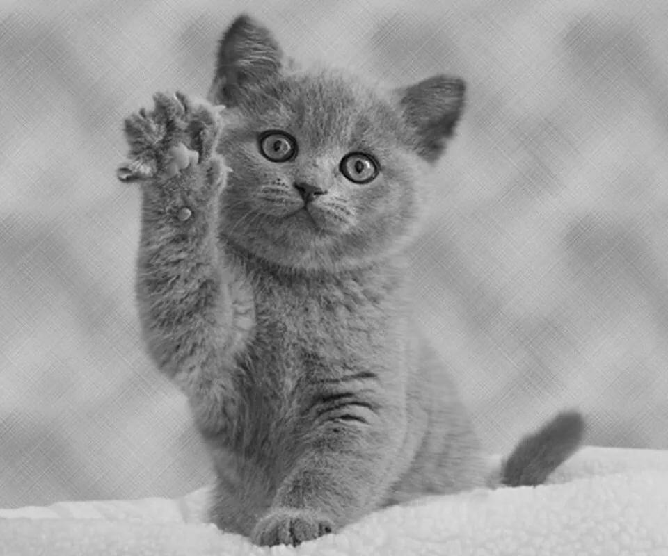 картинки с говорящими котами удачное
