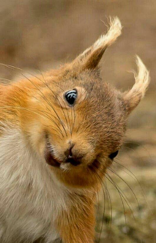 Днем, смешные картинки животных с белками