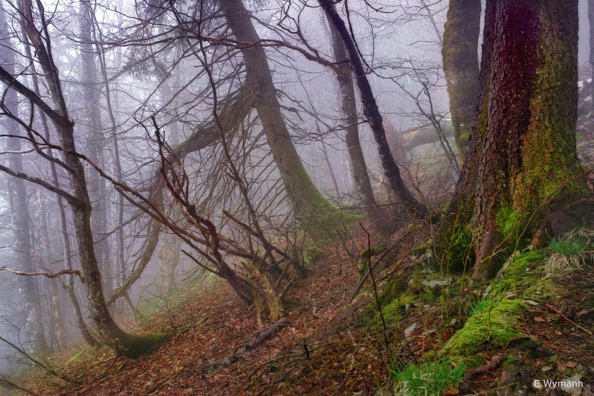 весенний лес, окутанный туманом