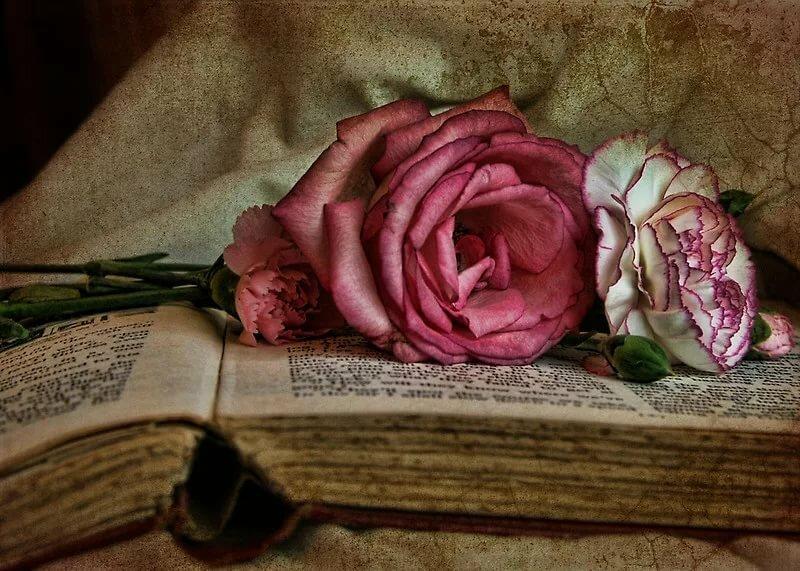 Картинка розы на книге