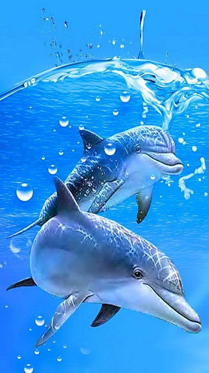 этом этапе картинки на телефон дельфинчики предыдущий пример