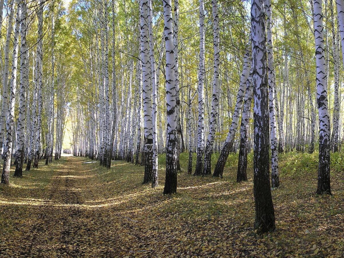 День, картинка природа россии весной