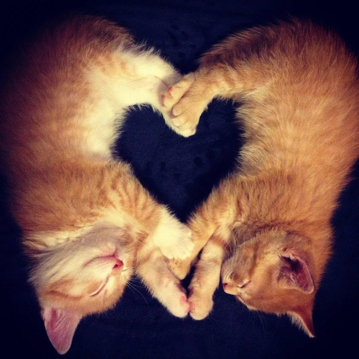 Бумаги, картинки с животными с надписью про любовь