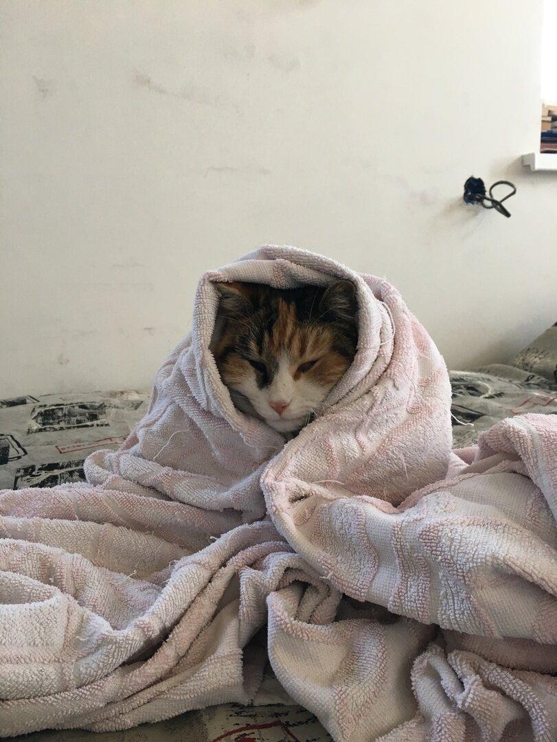 Под теплым одеялом картинки
