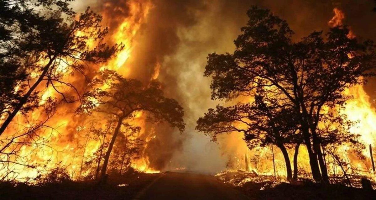 картинка верховой пожар