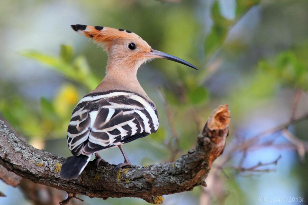 Птицы всех видов