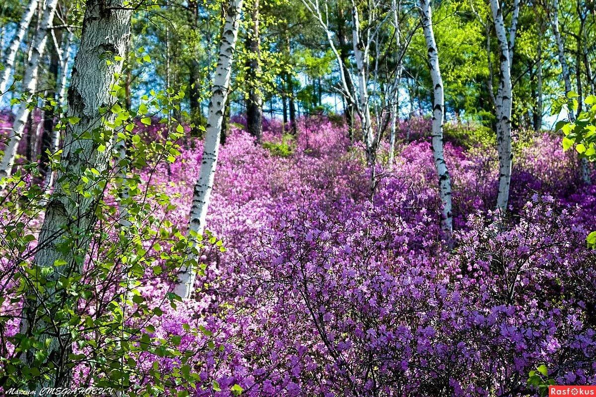 случае проявления фотографии забайкальская весна лет