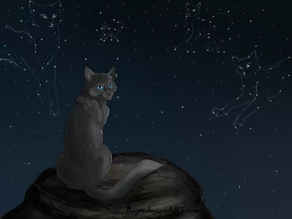 Коты воители картинки синяя звезда, днем натальи сентября