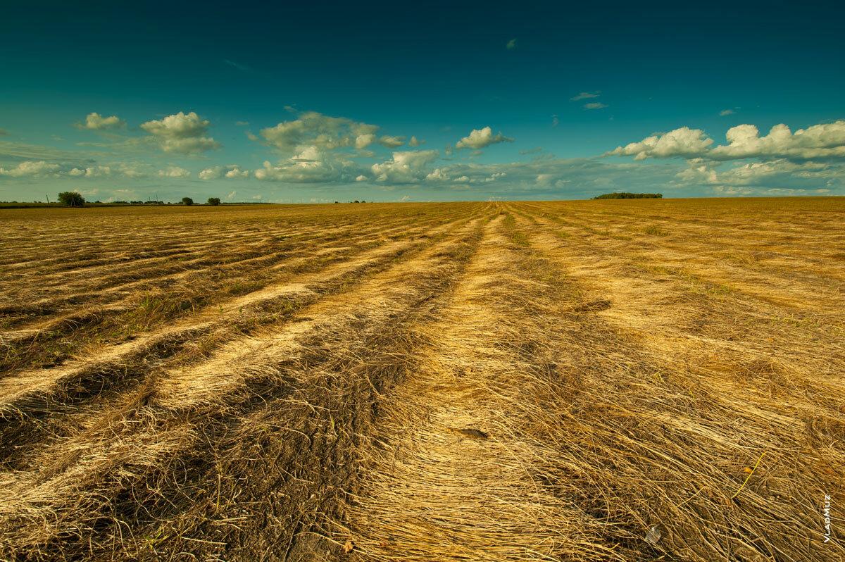 льняное поле картинка будка