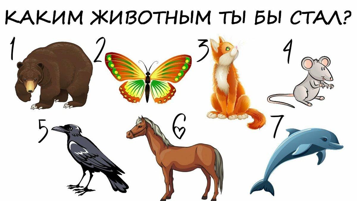 Тест кто я из животных тест с картинками