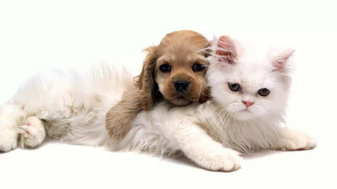 Картинки с котятами и собаками