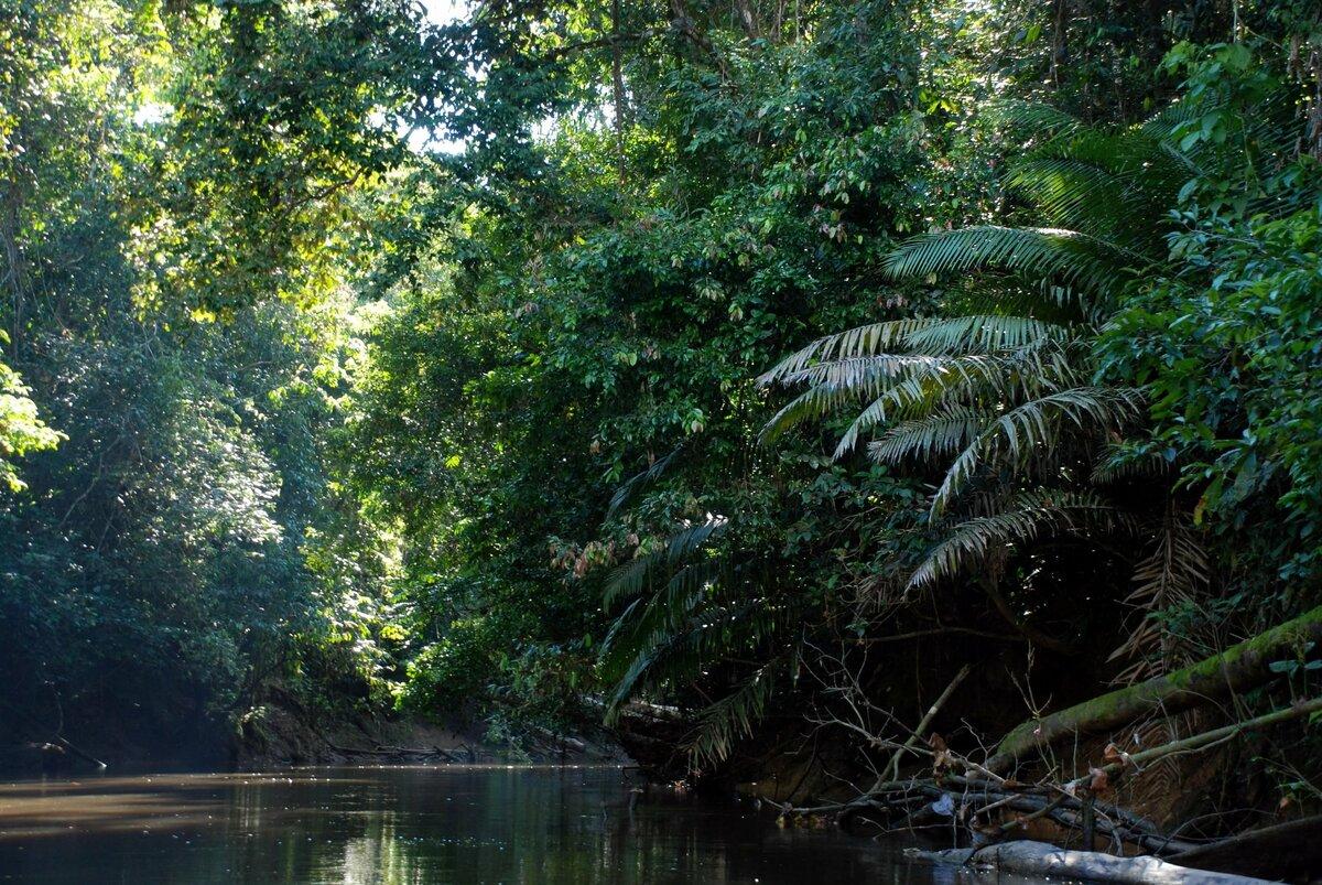 леса амазонки картинка захватывают плен