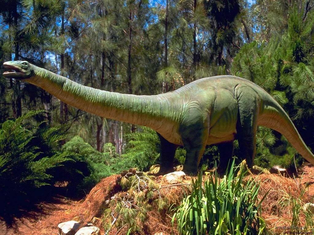 фотки с динозаврами
