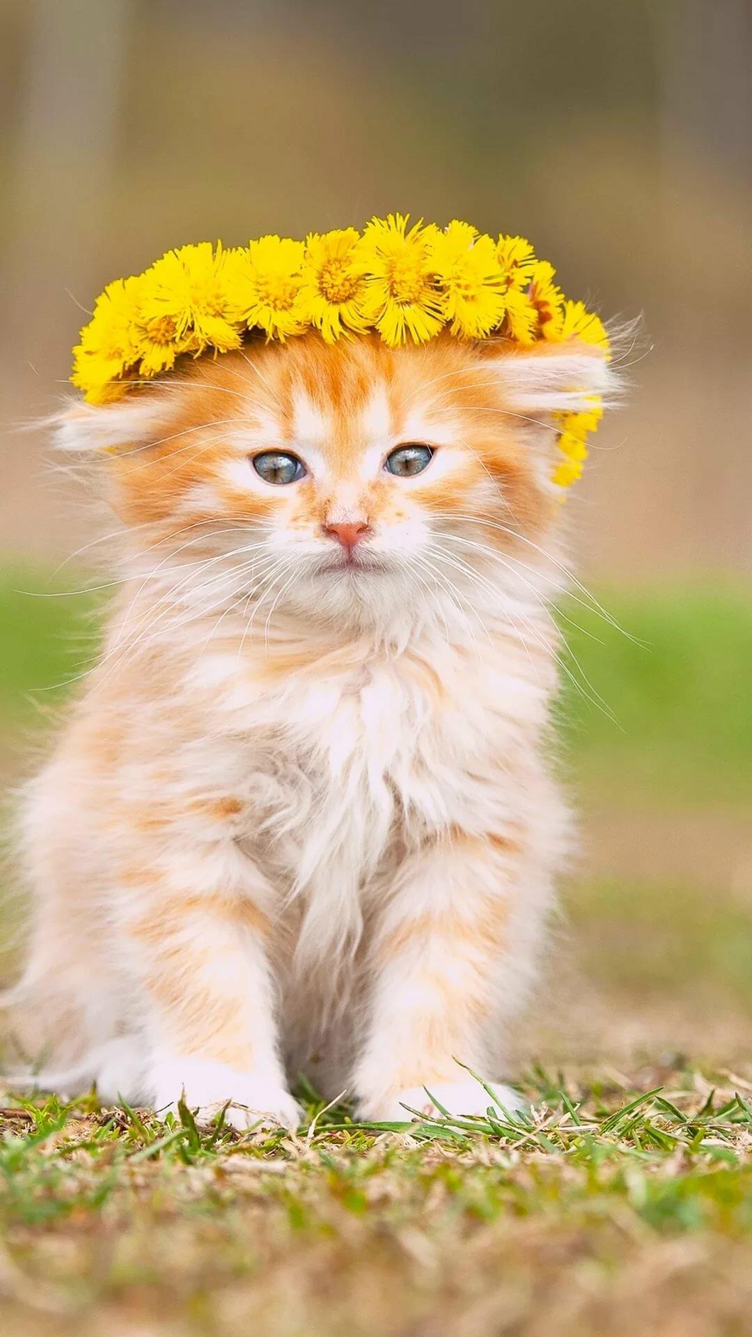 картинки желтого котика ногти лучше