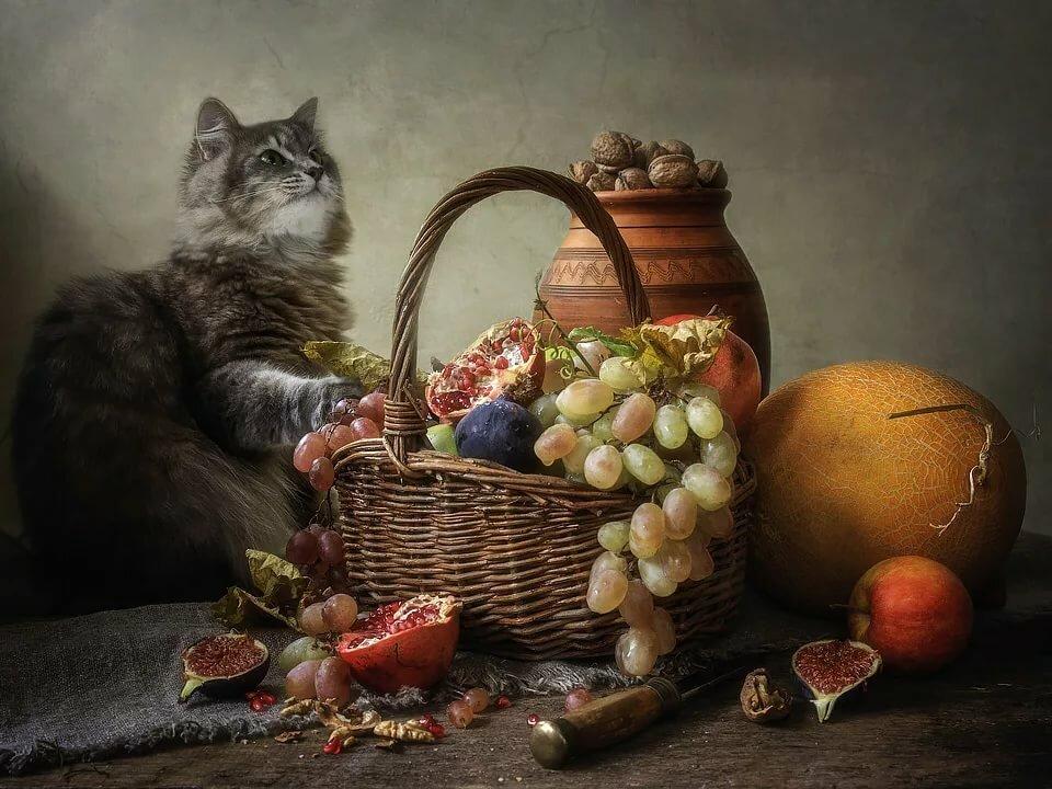 решила, что картинки фотонатюрморты с кошками обнародована лишь одна