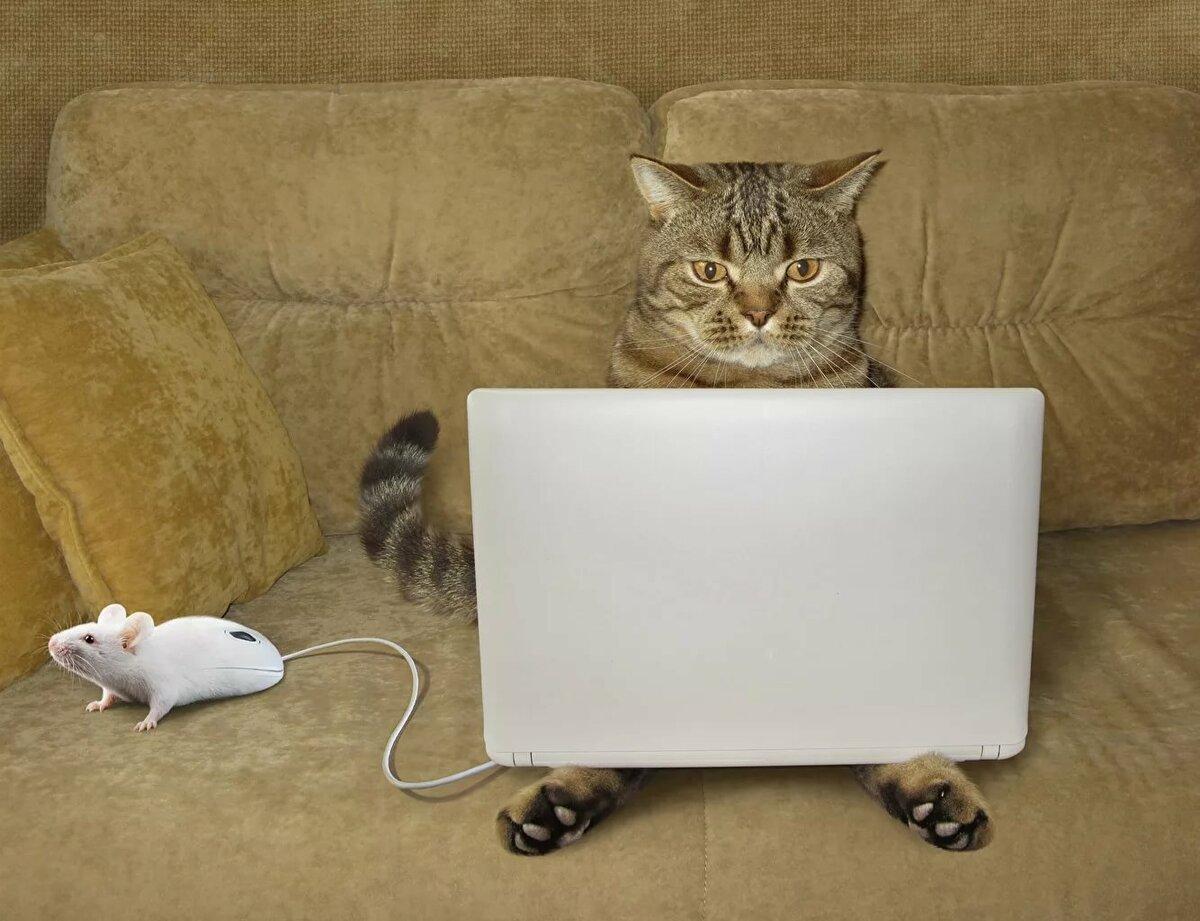 Смешная картинка с ноутбуком, карандашом девушки смотреть