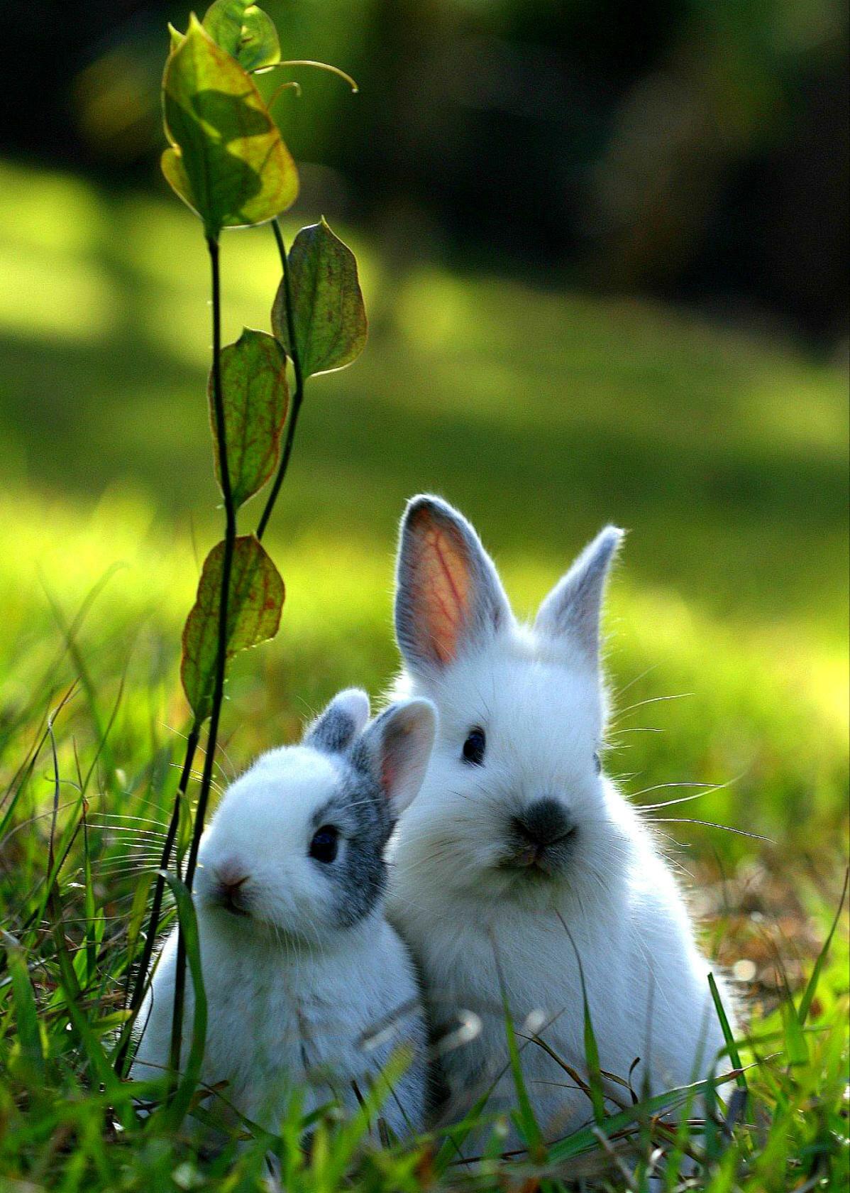 тот период живые картинки про кроликов это
