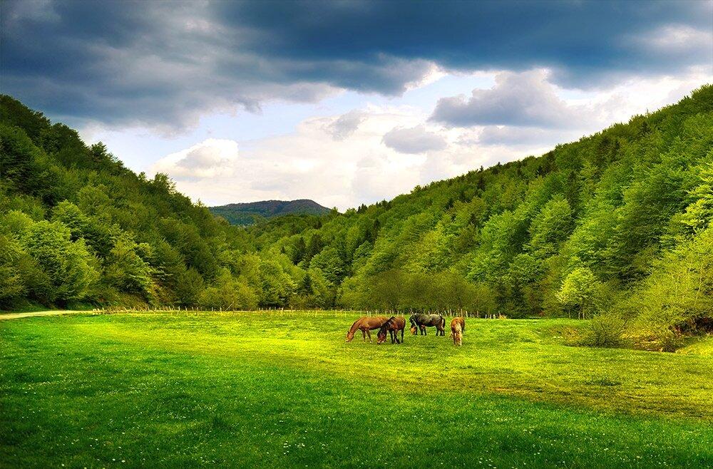 картинка природа украины летом цены