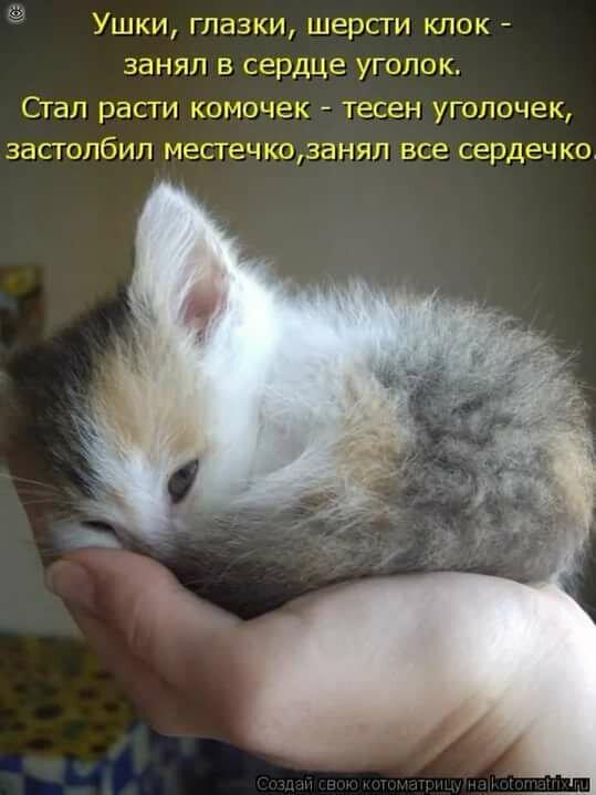 Прикольные картинки с надписями кошки