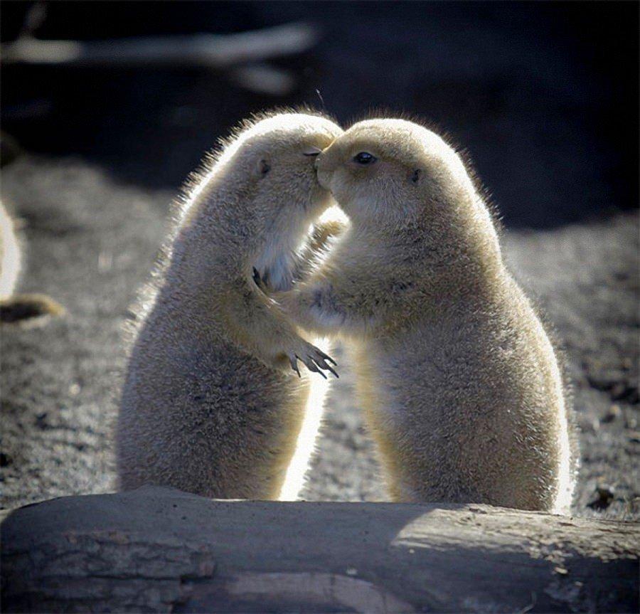 Романтика животные картинки