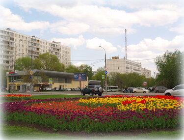 цветочные клумбы мурманск