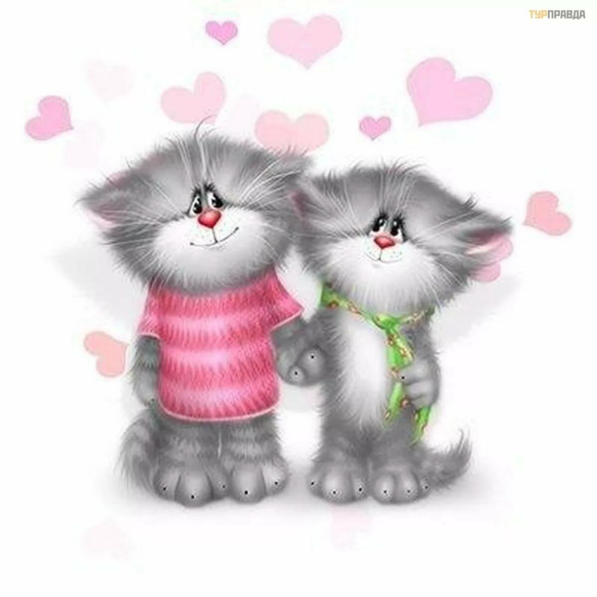 Поздравления, открытки с котиками любимому