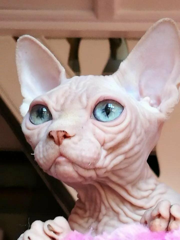 департамента кошку накрасили картинки задумались посадке