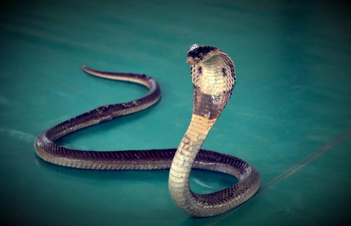 Картинки змей интересные