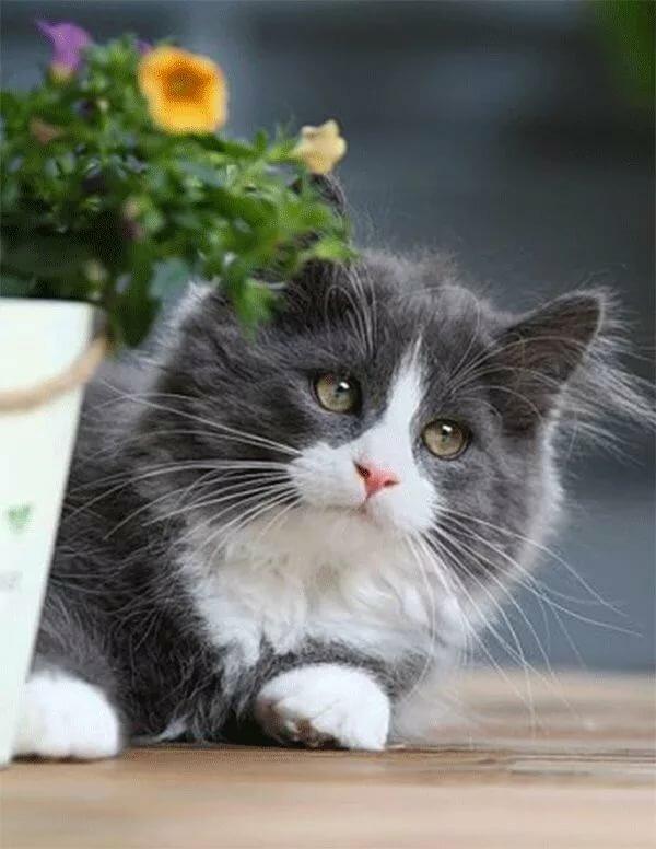 Кошки картинки гифы