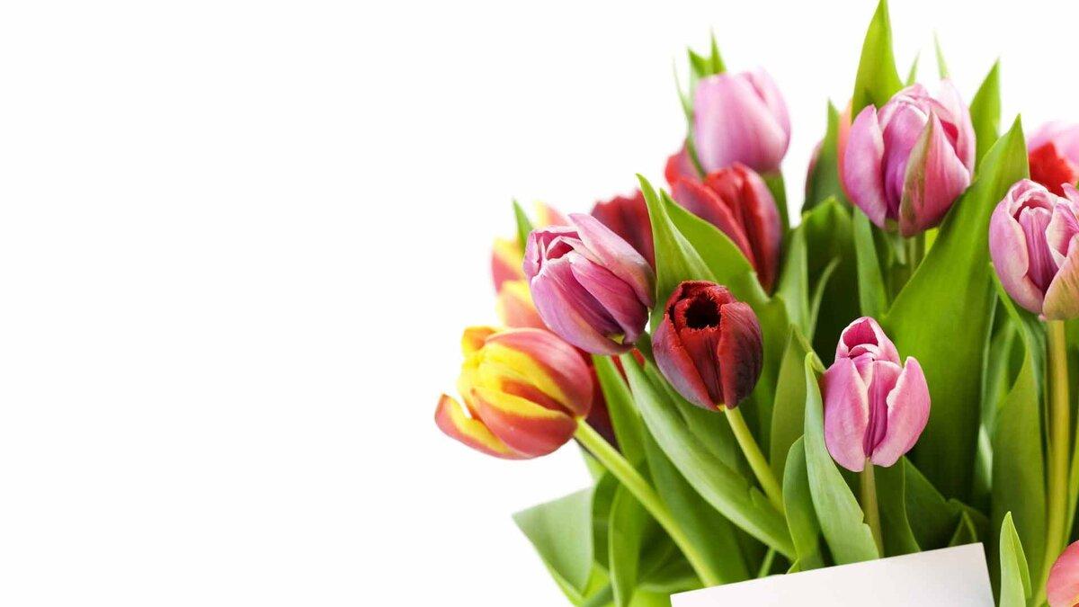 Тюльпаны открытка на 8 марта
