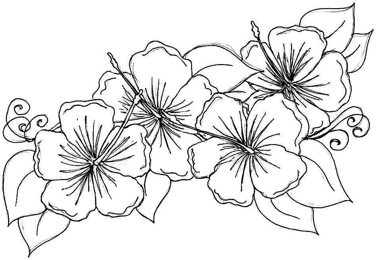 Картинки карандашом для раскрашивания цветы
