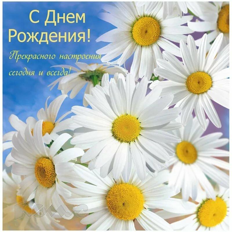 Поздравления открытка ромашки, днем танкиста поздравлением