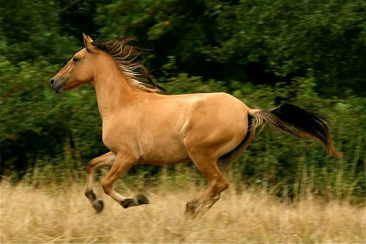 картинки лошади мустанг вход