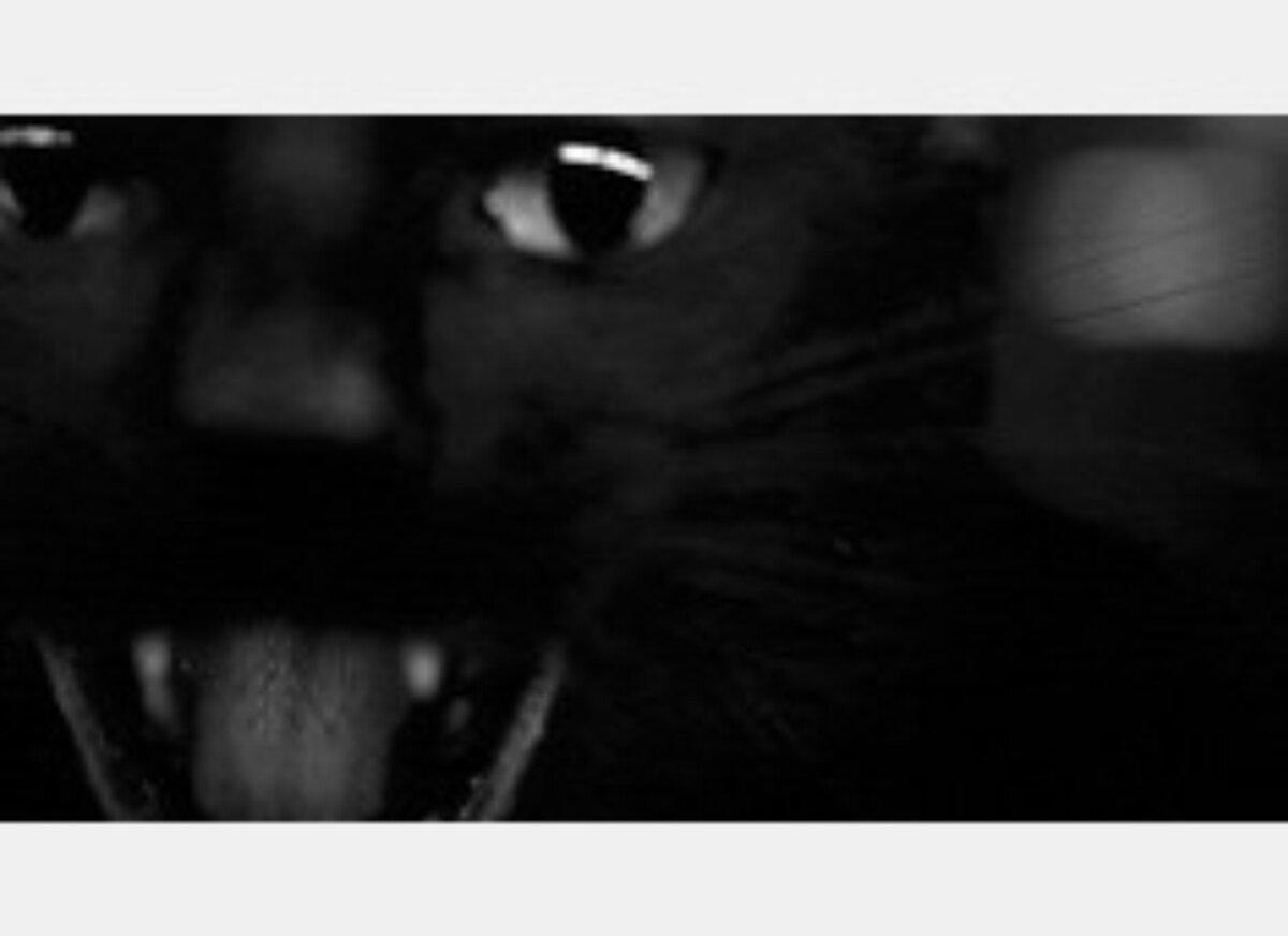 Кошка шипит гифка