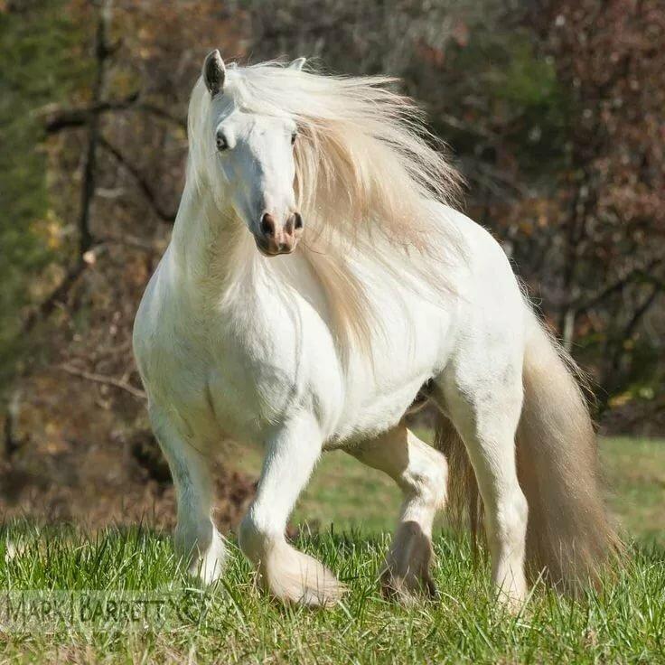 Днем, лошади фото красивые картинки с надписями какая порода