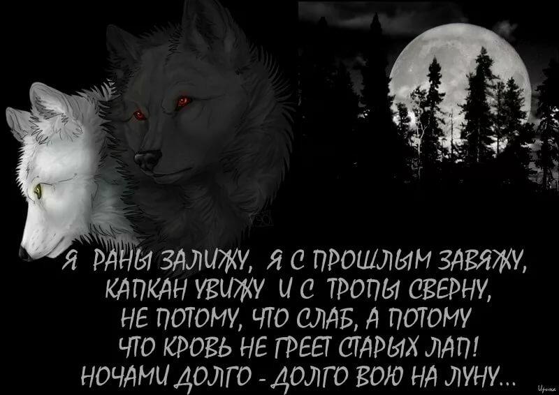 пишет открытка с волками и высказываниями пусть летит
