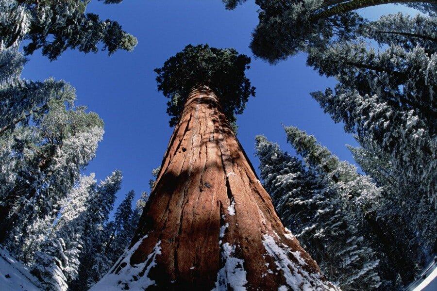 большие деревья фотографии пирожное