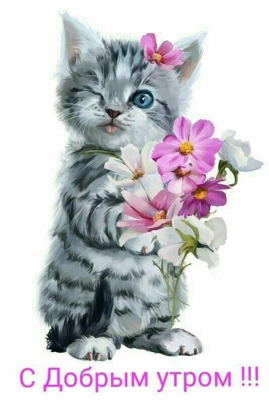Картинки с котенком с добрым утром