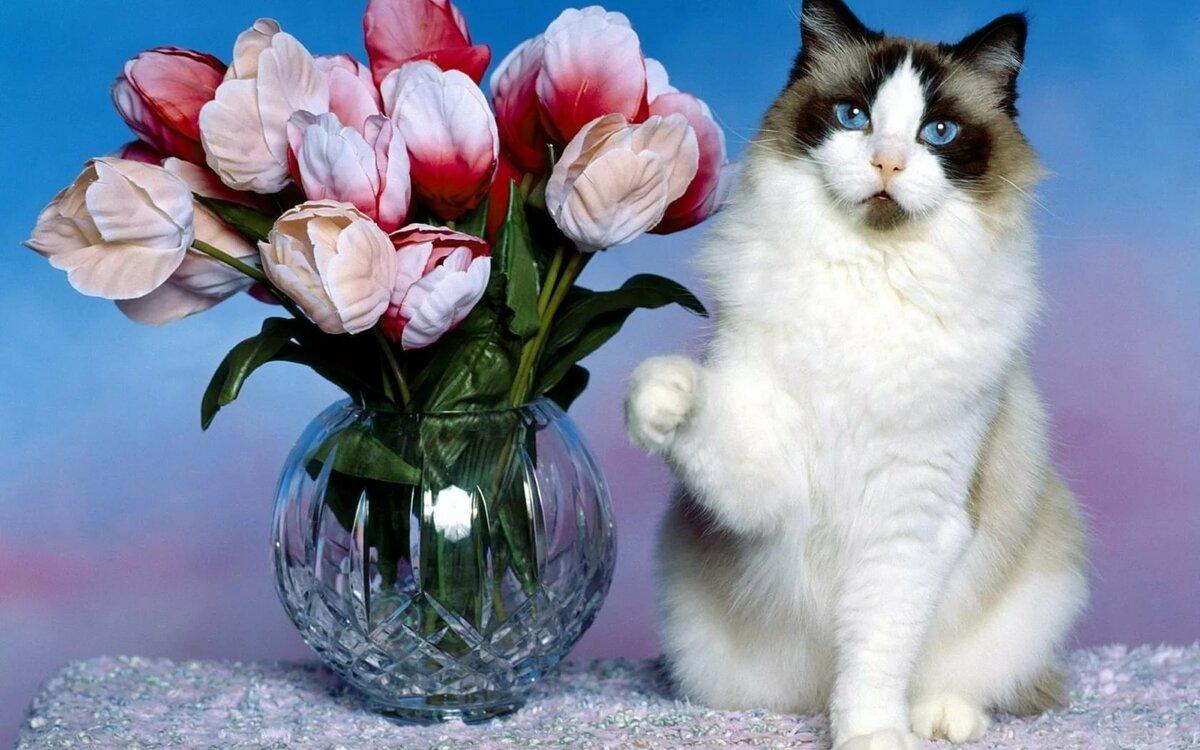 хочу цветочки картинка современной