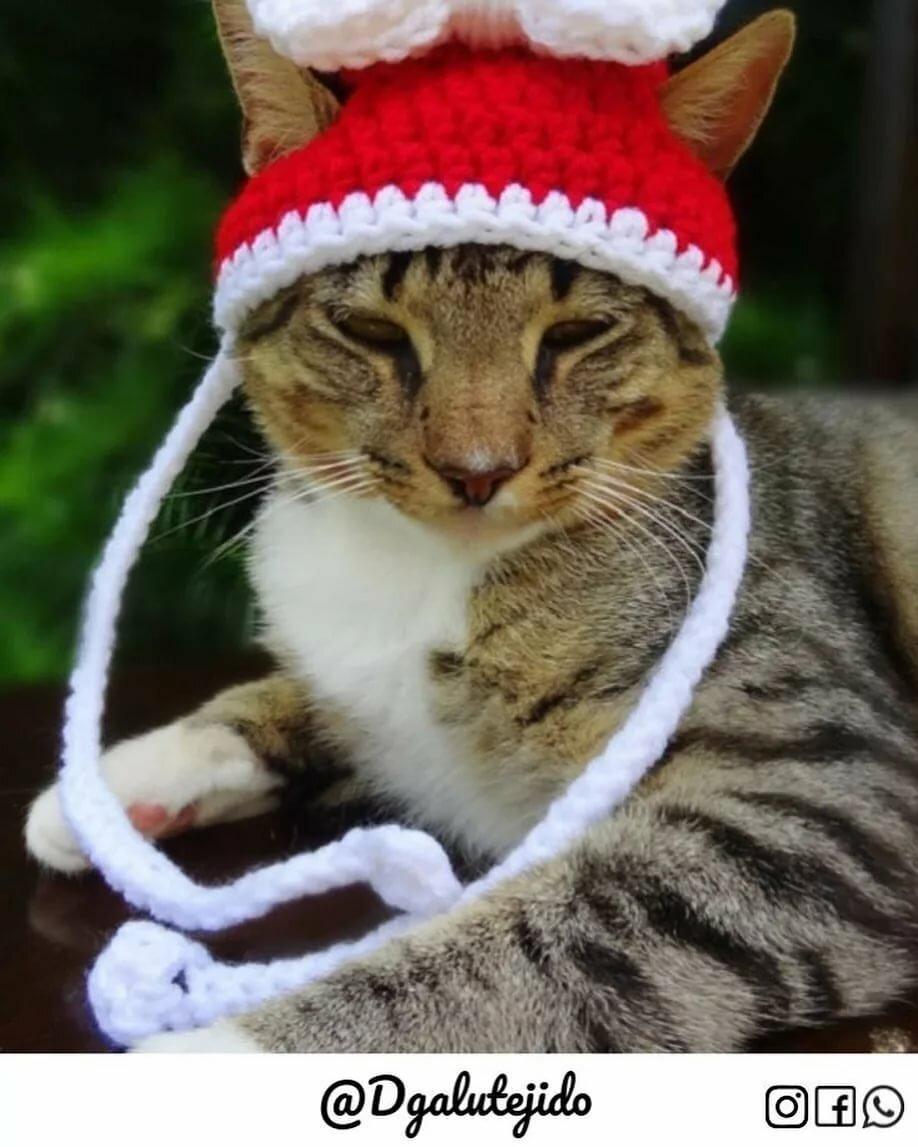 леопардом картинки шапок животных адресную